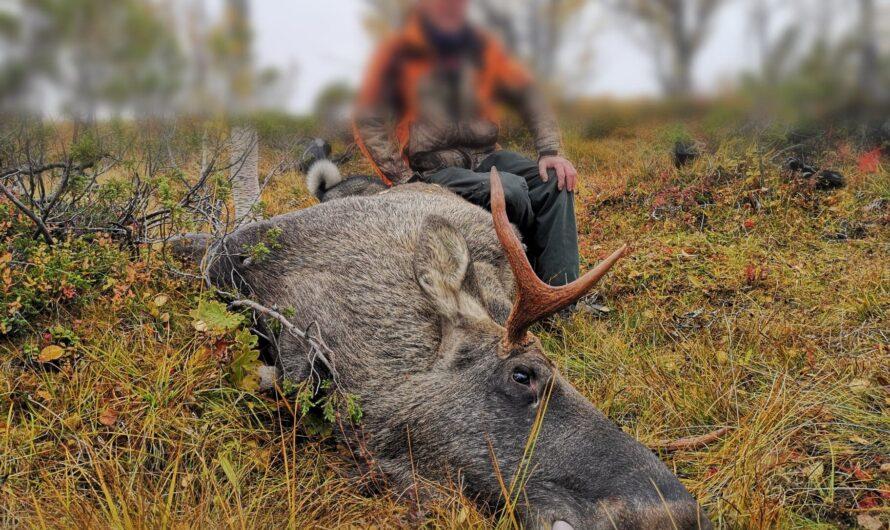 Fellingstallene etter jakta 2020 er nå klare!